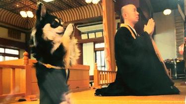 琉球王国時代から沖縄を見守り続けてきた《首里観音堂》と合掌犬コナンくん