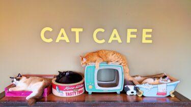 《猫まる茶屋》国際通りにある保護猫カフェで遊んできた!